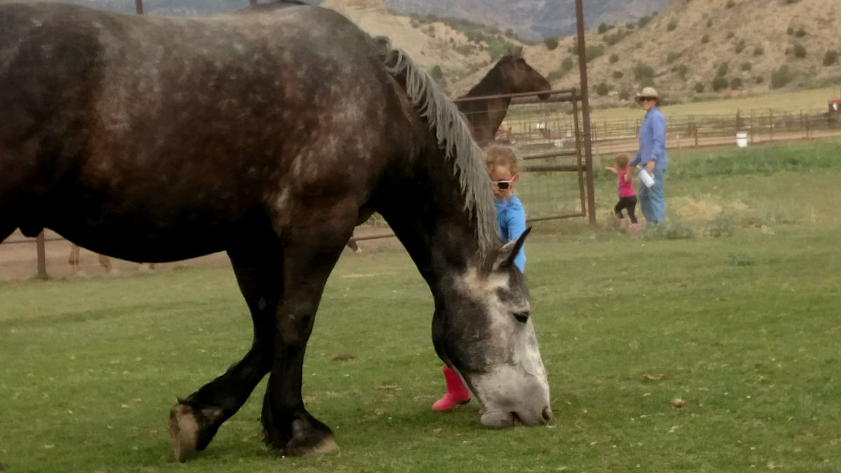 HorsePower Youth Life Skills Equine Therapy Course