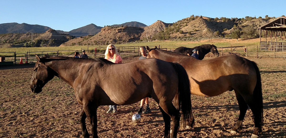 equine assisted learning group therapy