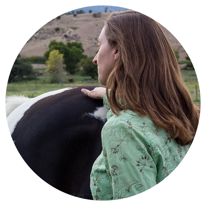 Mindfulness 201 Equine Therapy Course