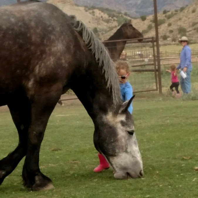 Youth Equine Therapy Classes